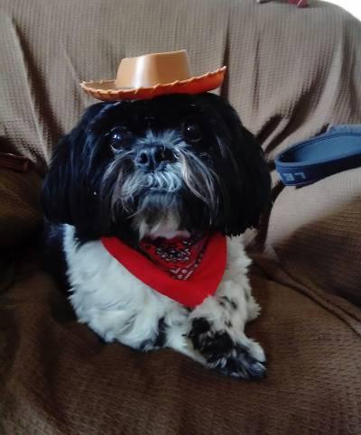 cowgirl kizzy